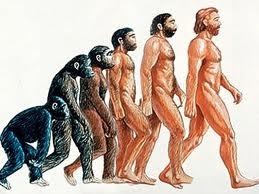 evolutia omului din maimuta